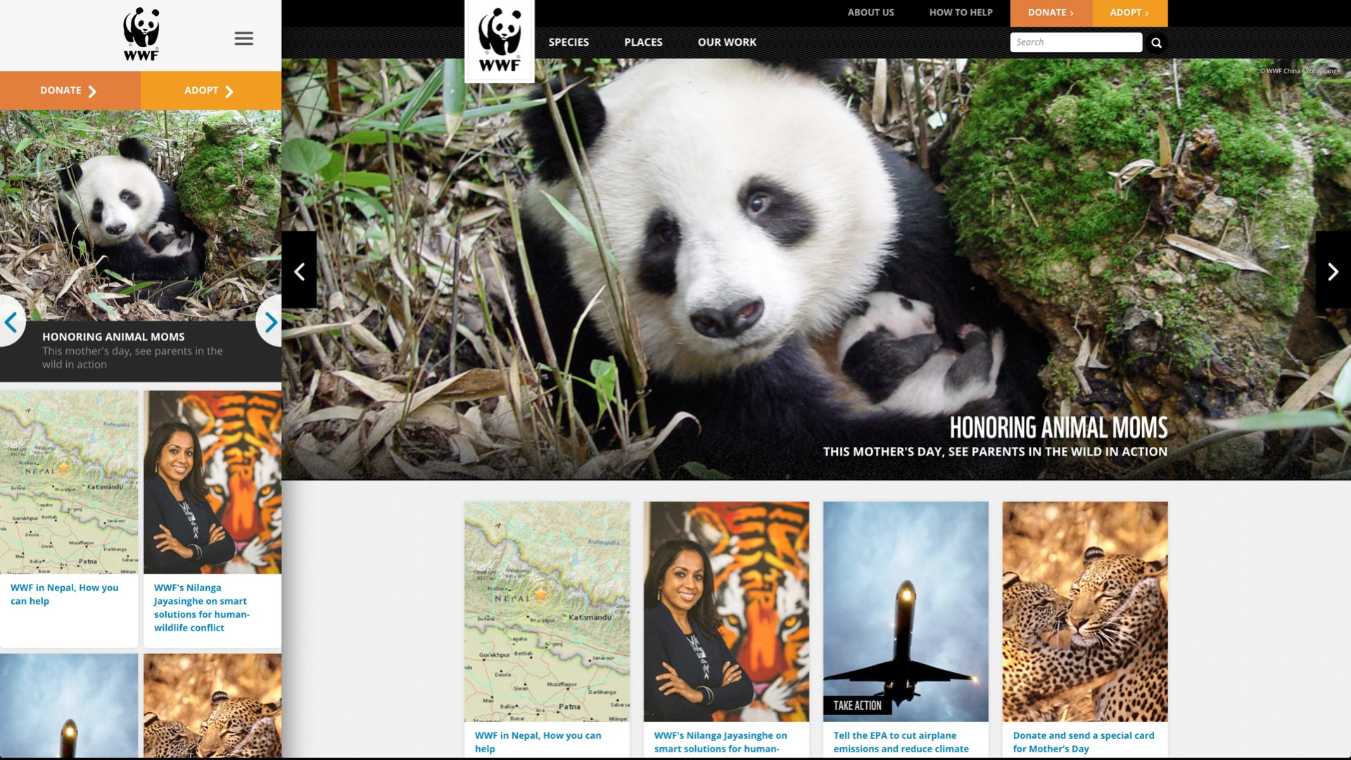 Screenshot of the World Wildlife Foundation website at small and large viewport sizes, with the header image cropped to two different aspect ratios